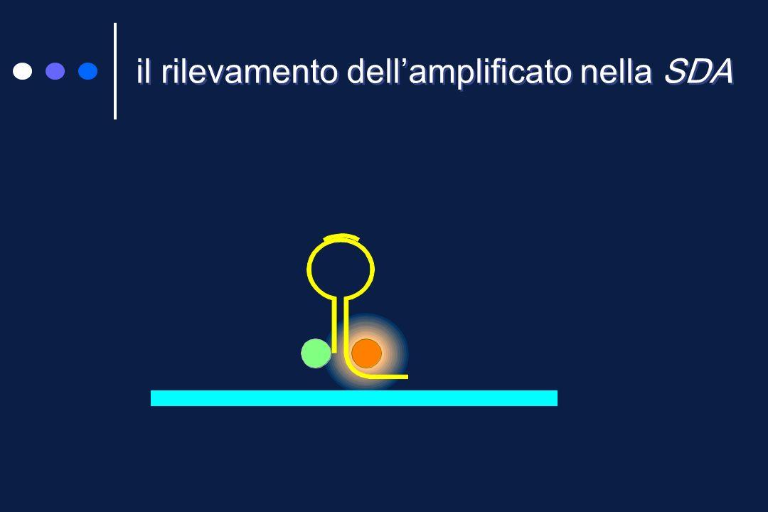 Strand displacement amplification (SDA) 2 Nella fase di amplificazione esponenziale nei dimeri, il filamento contenente il sito di restrizione viene tagliato in due frammenti da uno specifico enzima e la porzione a monte si allunga spiazzando quella a valle il frammento spiazzato funge da stampo per il primer a valle e contemporaneamente si allunga ricreando il sito di restrizione Un controllo interno, avente sequenza di annealing identica a quella del target, viene co-amplificato solo se non sono presenti inibitori La tecnica è isotermica
