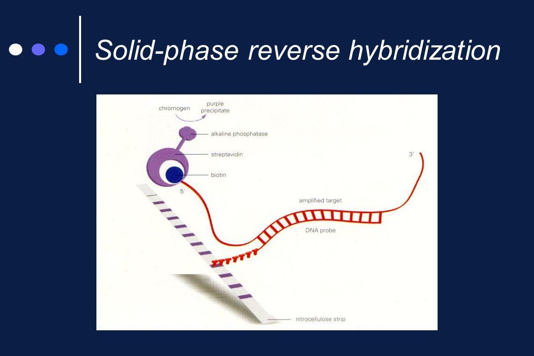 AccuProbe Bersaglio: rRNA 16S Reazione: ibridizzazione in fase liquida, direttamente sulle colonie Rivelazione: in chemioluminescenza (HPA) Specificità: M.