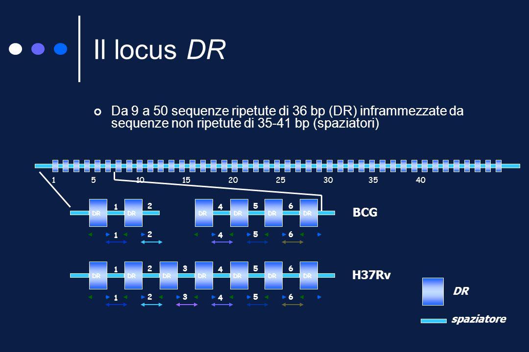 Il locus DR (direct repeat)