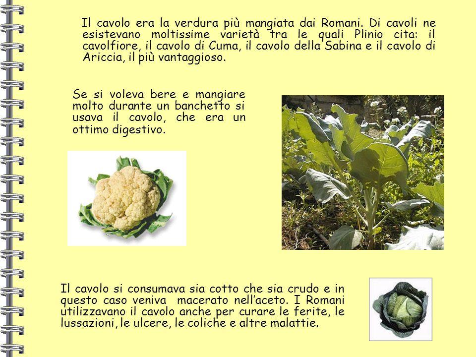 Il cavolo era la verdura più mangiata dai Romani. Di cavoli ne esistevano moltissime varietà tra le quali Plinio cita: il cavolfiore, il cavolo di Cum