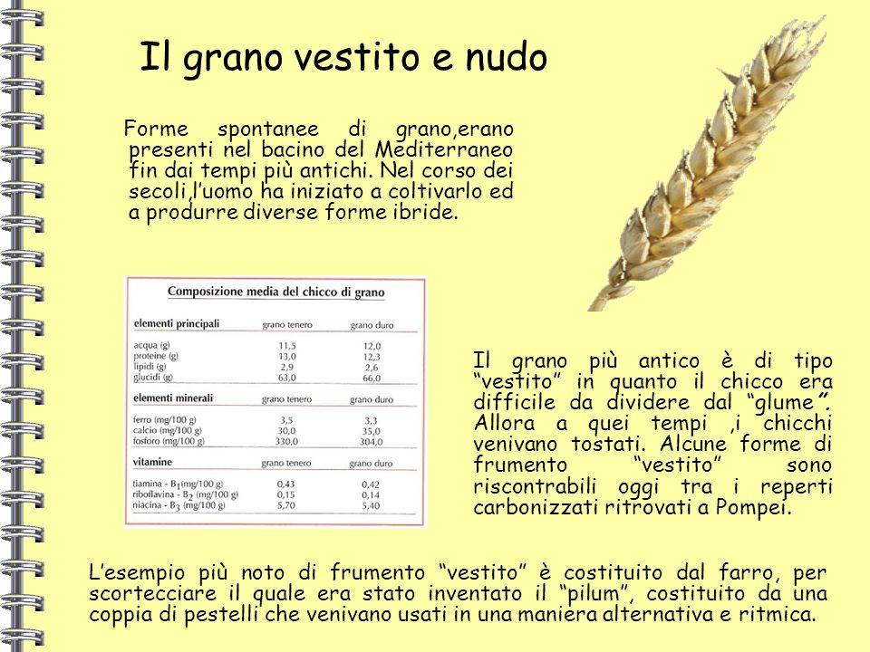 Forme spontanee di grano,erano presenti nel bacino del Mediterraneo fin dai tempi più antichi. Nel corso dei secoli,luomo ha iniziato a coltivarlo ed