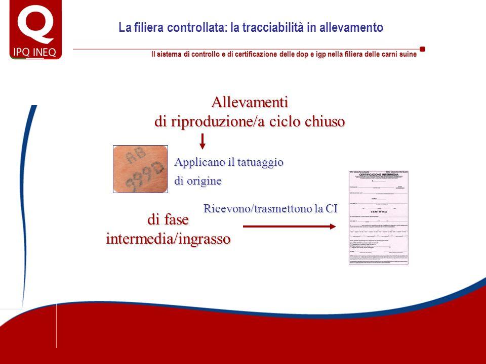 Il sistema di controllo e di certificazione delle dop e igp nella filiera delle carni suine La filiera controllata: la tracciabilità in allevamento Al