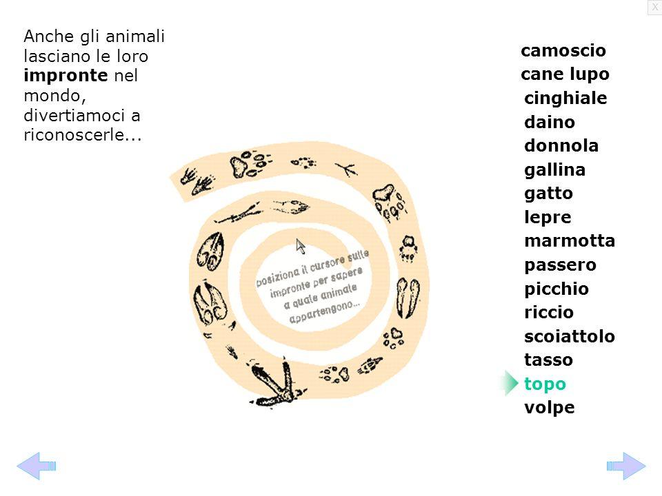 X Anche gli animali lasciano le loro impronte nel mondo, divertiamoci a riconoscerle... camoscio cane lupo cinghiale daino donnola gallina gatto lepre