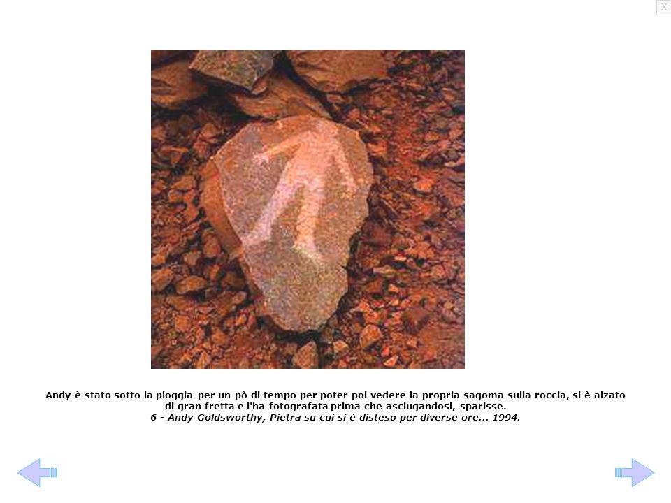 X Anche gli animali lasciano le loro impronte nel mondo, divertiamoci a riconoscerle...