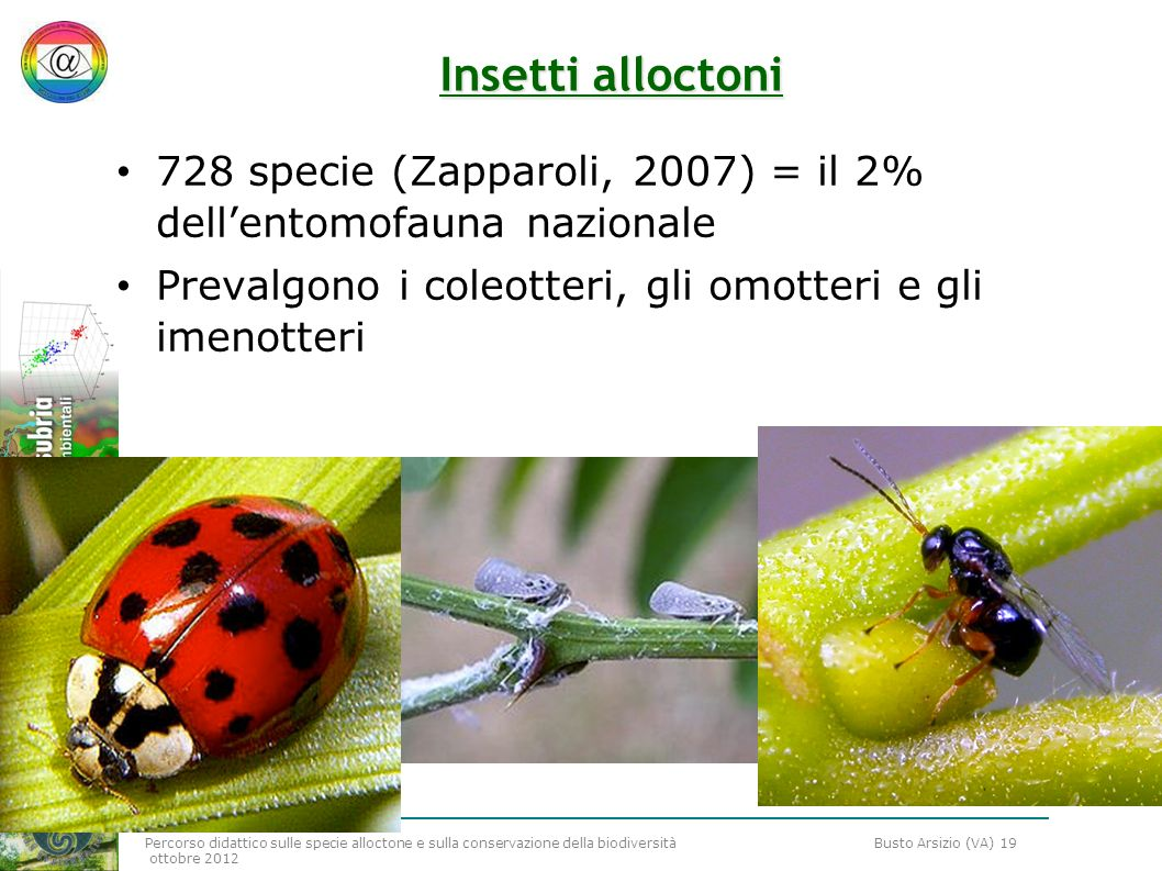 Percorso didattico sulle specie alloctone e sulla conservazione della biodiversità Busto Arsizio (VA) 19 ottobre 2012 Insetti alloctoni 728 specie (Za
