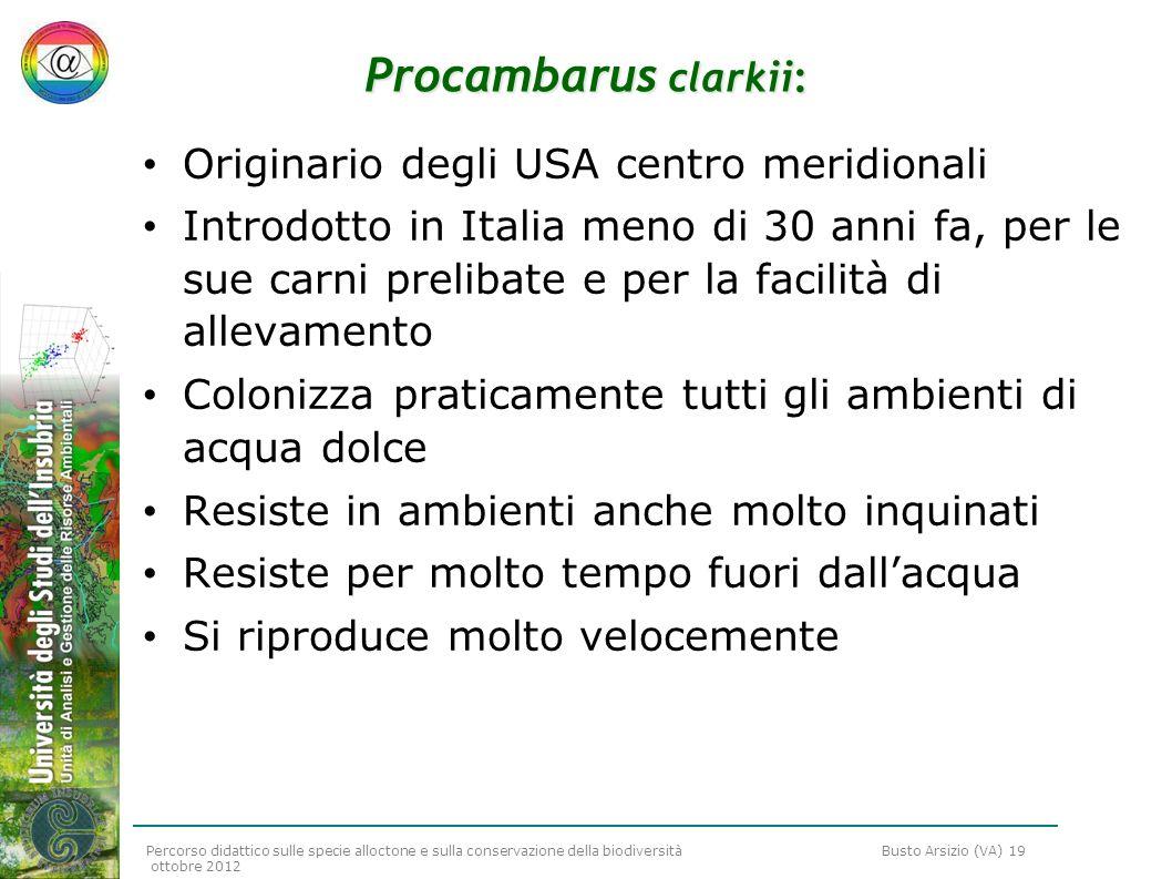 Percorso didattico sulle specie alloctone e sulla conservazione della biodiversità Busto Arsizio (VA) 19 ottobre 2012 Procambarus clarkii: Originario