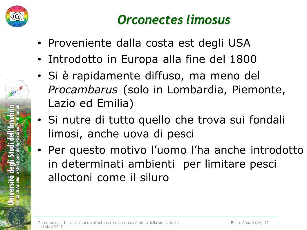 Percorso didattico sulle specie alloctone e sulla conservazione della biodiversità Busto Arsizio (VA) 19 ottobre 2012 Orconectes limosus Proveniente d