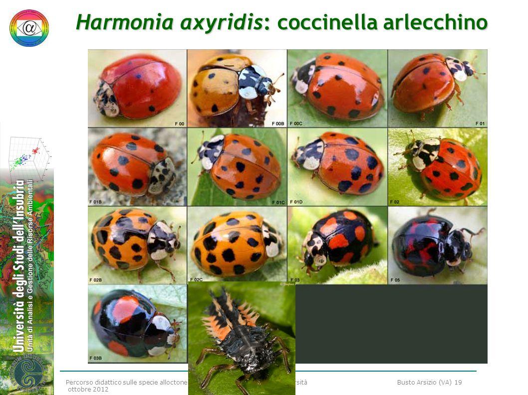 Percorso didattico sulle specie alloctone e sulla conservazione della biodiversità Busto Arsizio (VA) 19 ottobre 2012 Harmonia axyridis: coccinella ar