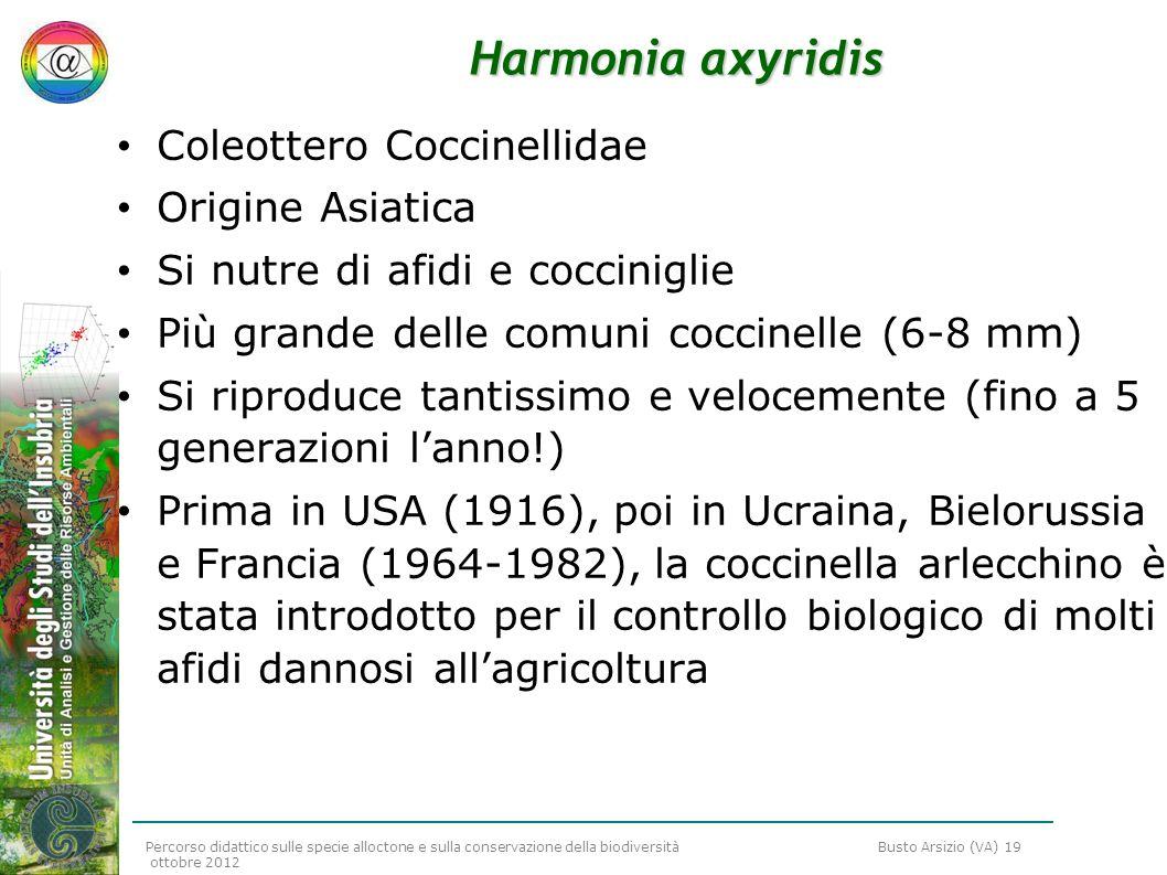Percorso didattico sulle specie alloctone e sulla conservazione della biodiversità Busto Arsizio (VA) 19 ottobre 2012 Harmonia axyridis Coleottero Coc