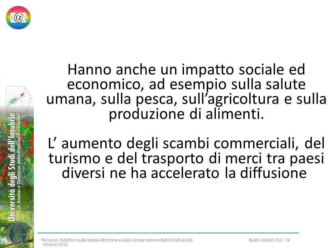 Percorso didattico sulle specie alloctone e sulla conservazione della biodiversità Busto Arsizio (VA) 19 ottobre 2012 Invertebrati alloctoni per la fauna italiana: una carrellata