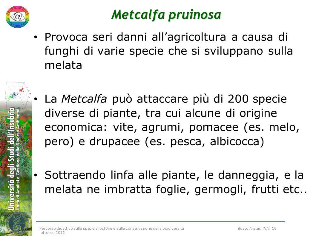 Percorso didattico sulle specie alloctone e sulla conservazione della biodiversità Busto Arsizio (VA) 19 ottobre 2012 Metcalfa pruinosa Provoca seri d