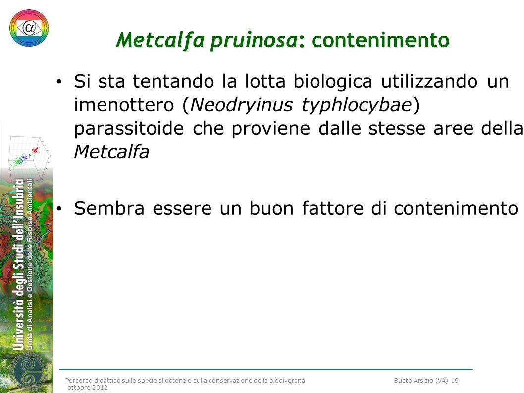 Percorso didattico sulle specie alloctone e sulla conservazione della biodiversità Busto Arsizio (VA) 19 ottobre 2012 Metcalfa pruinosa: contenimento