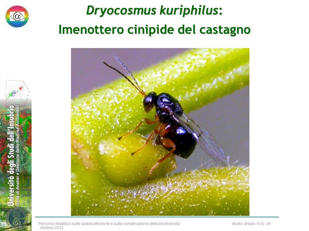 Percorso didattico sulle specie alloctone e sulla conservazione della biodiversità Busto Arsizio (VA) 19 ottobre 2012 Dryocosmus kuriphilus: Imenotter