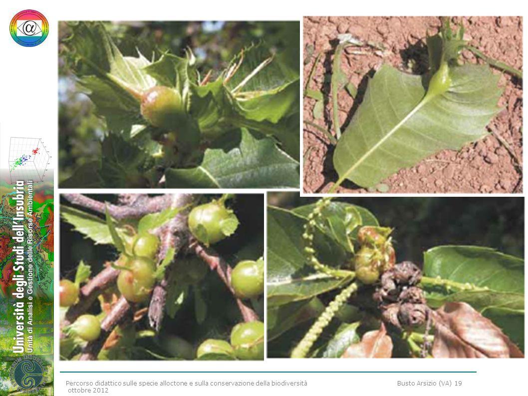 Percorso didattico sulle specie alloctone e sulla conservazione della biodiversità Busto Arsizio (VA) 19 ottobre 2012
