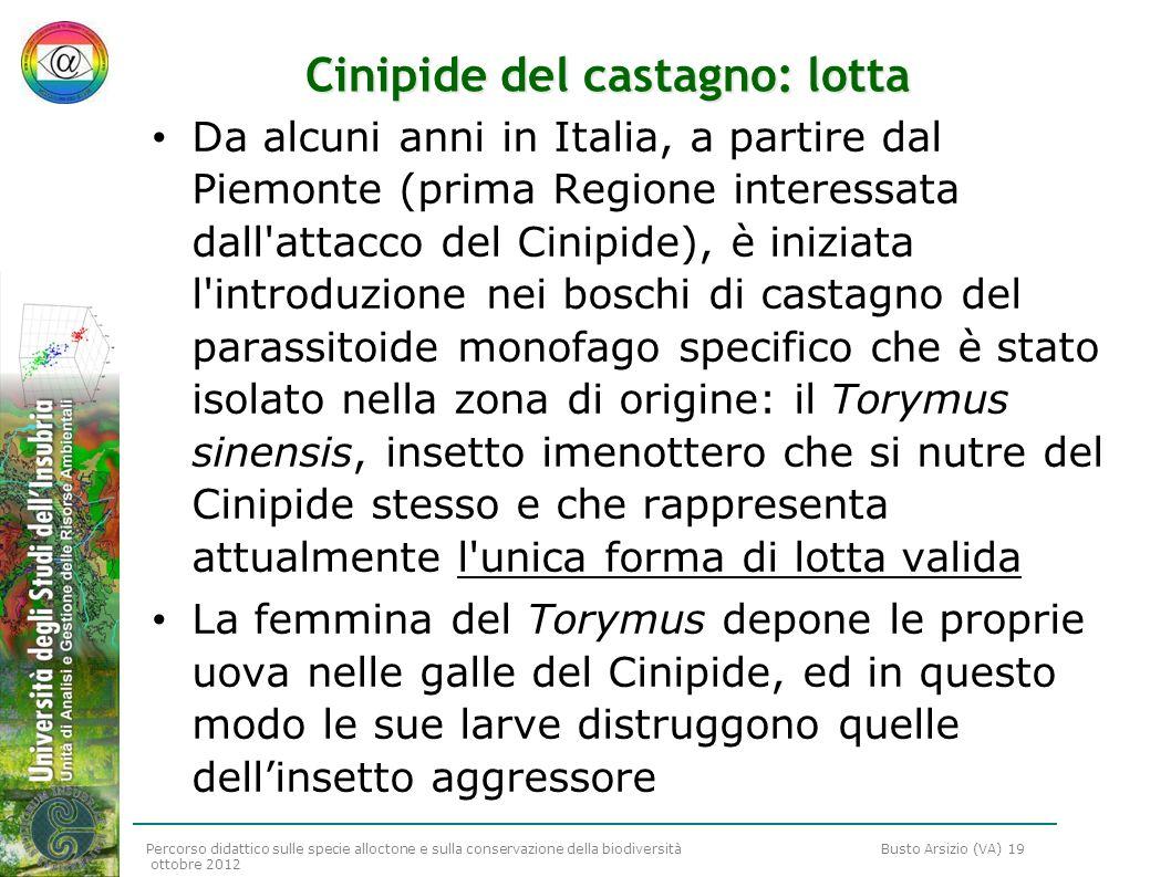 Percorso didattico sulle specie alloctone e sulla conservazione della biodiversità Busto Arsizio (VA) 19 ottobre 2012 Cinipide del castagno: lotta Da