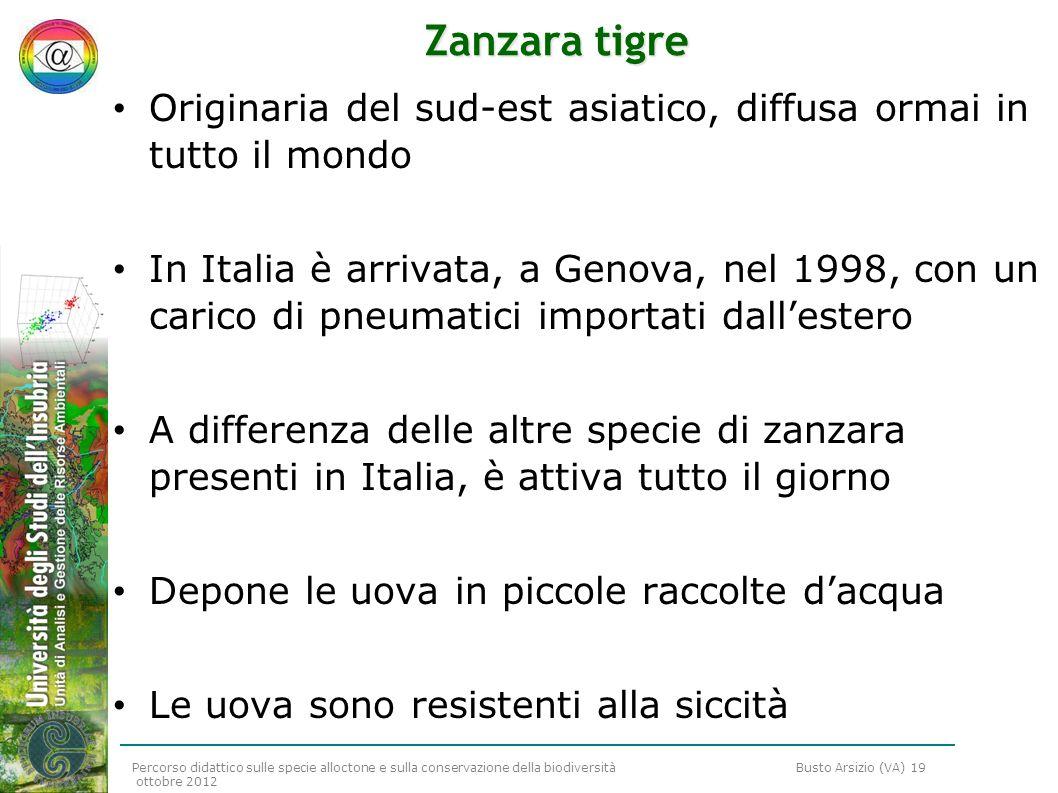 Percorso didattico sulle specie alloctone e sulla conservazione della biodiversità Busto Arsizio (VA) 19 ottobre 2012 Zanzara tigre Originaria del sud