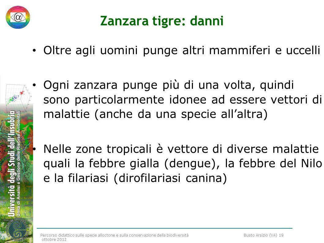 Percorso didattico sulle specie alloctone e sulla conservazione della biodiversità Busto Arsizio (VA) 19 ottobre 2012 Zanzara tigre: danni Oltre agli