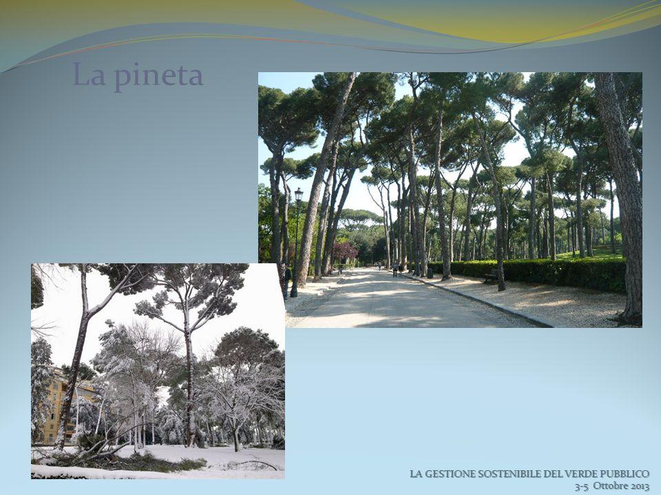 La pineta LA GESTIONE SOSTENIBILE DEL VERDE PUBBLICO 3-5 Ottobre 2013 3-5 Ottobre 2013