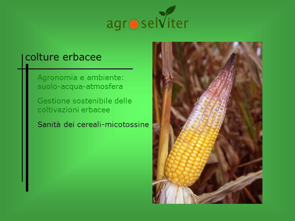 colture erbacee Agronomia e ambiente: suolo-acqua-atmosfera Sanità dei cereali-micotossine Gestione sostenibile delle coltivazioni erbacee