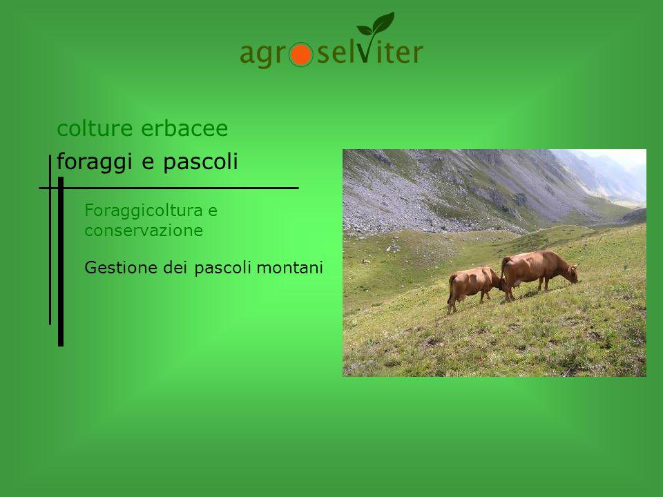 Gestione dei pascoli montani colture erbacee foraggi e pascoli
