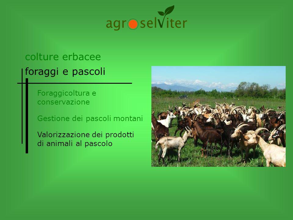 Foraggicoltura e conservazione Gestione dei pascoli montani colture erbacee foraggi e pascoli Valorizzazione dei prodotti di animali al pascolo