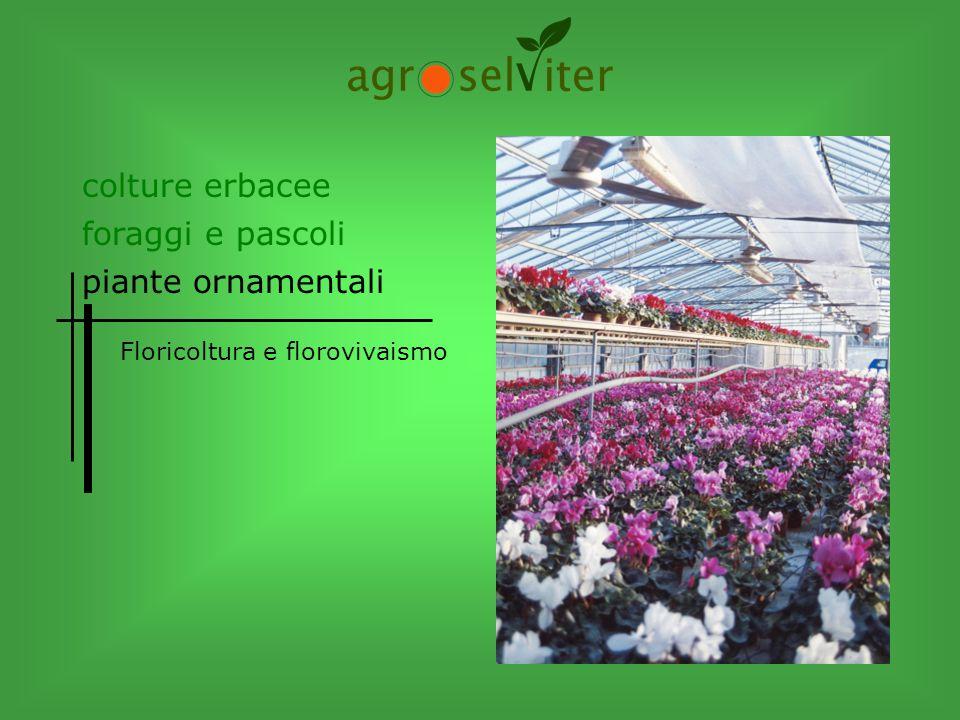 colture erbacee piante ornamentali foraggi e pascoli Floricoltura e florovivaismo