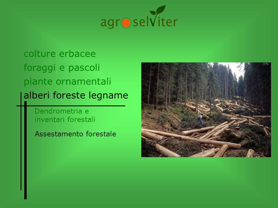 colture erbacee alberi foreste legname Dendrometria e inventari forestali Assestamento forestale piante ornamentali foraggi e pascoli