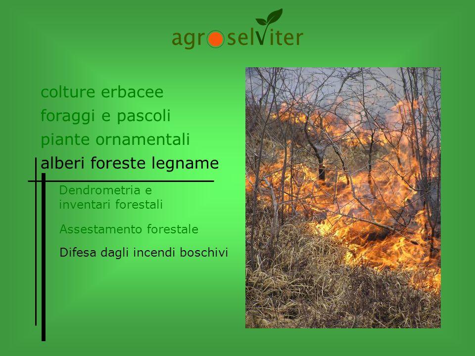 colture erbacee alberi foreste legname Dendrometria e inventari forestali Difesa dagli incendi boschivi Assestamento forestale piante ornamentali fora