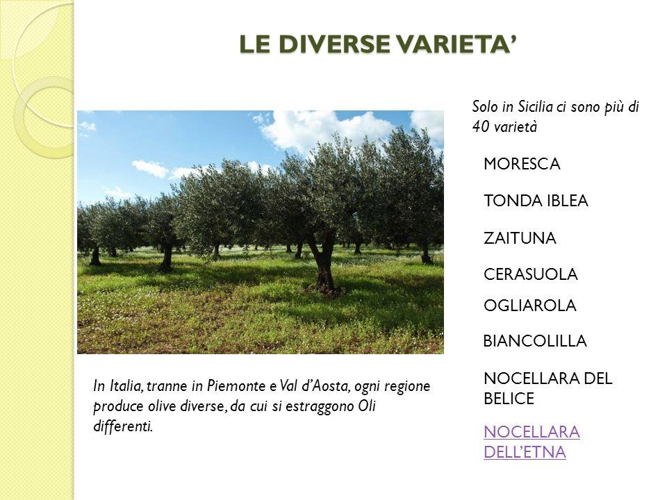 LE DIVERSE VARIETA In Italia, tranne in Piemonte e Val dAosta, ogni regione produce olive diverse, da cui si estraggono Oli differenti. Solo in Sicili