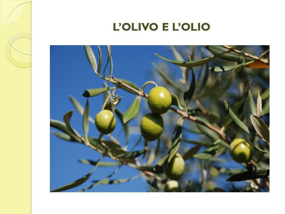 ORIGINE E DIFFUSIONE DELLULIVO E la più antica pianta da frutto coltivata ; Risale al XVI secolo a.C.
