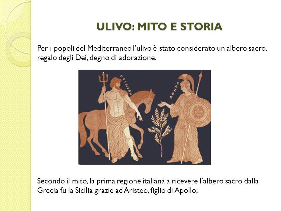 ULIVO: MITO E STORIA Secondo il mito, la prima regione italiana a ricevere lalbero sacro dalla Grecia fu la Sicilia grazie ad Aristeo, figlio di Apoll