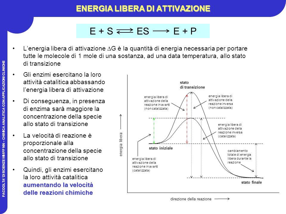FACOOLTA DI SCIENZE MM FF NN – CHIMICA ANALITICA CON APPLICAZIONI CLINICHE ENERGIA LIBERA DI ATTIVAZIONE Lenergia libera di attivazione G è la quantità di energia necessaria per portare tutte le molecole di 1 mole di una sostanza, ad una data temperatura, allo stato di transizione stato iniziale stato finale stato di transizione energia libera di attivazione della reazione in avanti (catalizzata) energia libera di attivazione della reazione in avanti (non catalizzata) energia libera di attivazione della reazione inversa (non catalizzata) energia libera di attivazione della reazione inversa (catalizzata) cambiamento totale di energia libera durante la reazione direzione della reazione energia libera Gli enzimi esercitano la loro attività catalitica abbassando lenergia libera di attivazione Di conseguenza, in presenza di enzima sarà maggiore la concentrazione della specie allo stato di transizione La velocità di reazione è proporzionale alla concentrazione della specie allo stato di transizione aumentando la velocità delle reazioni chimicheQuindi, gli enzimi esercitano la loro attività catalitica aumentando la velocità delle reazioni chimiche E + S ES E + P