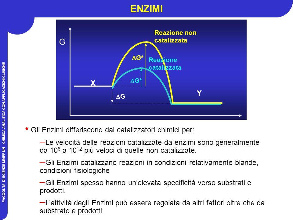 FACOOLTA DI SCIENZE MM FF NN – CHIMICA ANALITICA CON APPLICAZIONI CLINICHE ENZIMI X G G Y Reazione non catalizzata G* Reazione catalizzata Gli Enzimi differiscono dai catalizzatori chimici per: – Le velocità delle reazioni catalizzate da enzimi sono generalmente da 10 6 a 10 12 più veloci di quelle non catalizzate.