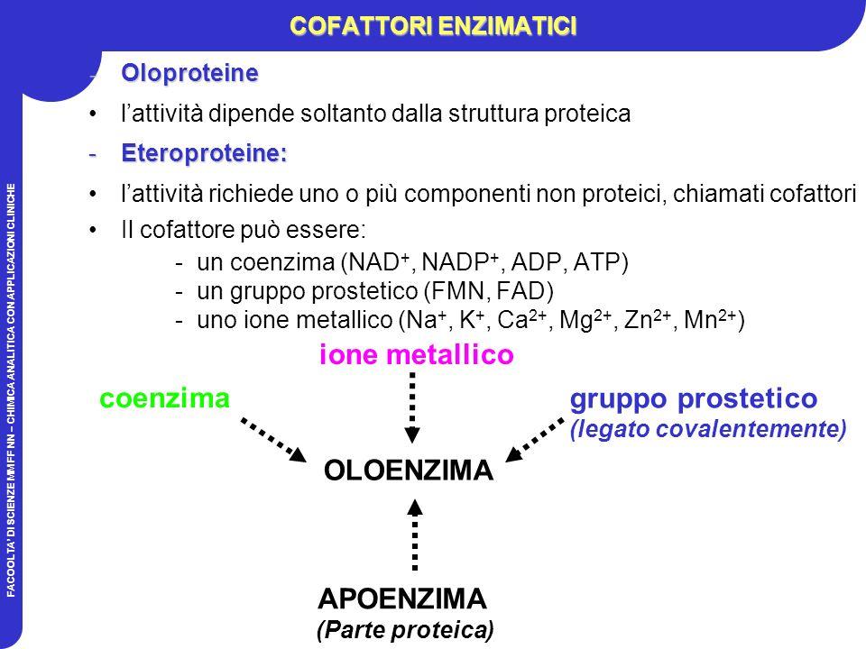 FACOOLTA DI SCIENZE MM FF NN – CHIMICA ANALITICA CON APPLICAZIONI CLINICHE COFATTORI ENZIMATICI -Oloproteine lattività dipende soltanto dalla struttura proteica -Eteroproteine: lattività richiede uno o più componenti non proteici, chiamati cofattori Il cofattore può essere: -un coenzima (NAD +, NADP +, ADP, ATP) -un gruppo prostetico (FMN, FAD) -uno ione metallico (Na +, K +, Ca 2+, Mg 2+, Zn 2+, Mn 2+ ) APOENZIMA (Parte proteica) OLOENZIMA coenzima ione metallico gruppo prostetico (legato covalentemente)