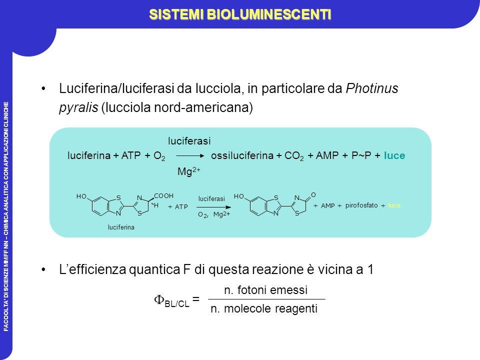 FACOOLTA DI SCIENZE MM FF NN – CHIMICA ANALITICA CON APPLICAZIONI CLINICHE SISTEMI BIOLUMINESCENTI Luciferina/luciferasi da lucciola, in particolare da Photinus pyralis (lucciola nord-americana) Lefficienza quantica F di questa reazione è vicina a 1 luciferina + ATP + O 2 ossiluciferina + CO 2 + AMP + P~P + luce luciferasi Mg 2+ + AMP + + luce N S S N HO COOH H N S S N HO O + ATP O 2, Mg 2+ luciferina luciferasi pirofosfato BL/CL = n.
