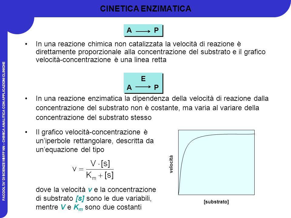 FACOOLTA DI SCIENZE MM FF NN – CHIMICA ANALITICA CON APPLICAZIONI CLINICHE E A P E A P CINETICA ENZIMATICA In una reazione chimica non catalizzata la velocità di reazione è direttamente proporzionale alla concentrazione del substrato e il grafico velocità-concentrazione è una linea retta In una reazione enzimatica la dipendenza della velocità di reazione dalla concentrazione del substrato non è costante, ma varia al variare della concentrazione del substrato stesso Il grafico velocità-concentrazione è uniperbole rettangolare, descritta da unequazione del tipo dove la velocità v e la concentrazione di substrato [s] sono le due variabili, mentre V e K m sono due costanti [substrato] velocità A P