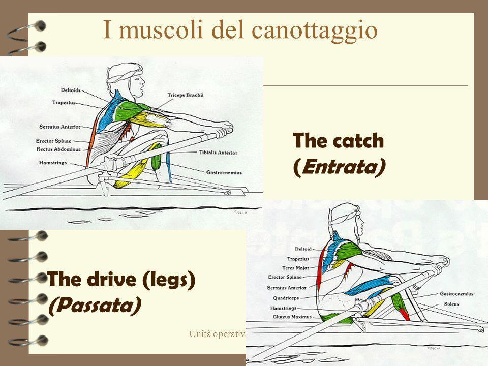 Unità operativa di Pediatria Piacenza I muscoli del canottaggio The drive (legs) (Passata) The catch( Entrata)