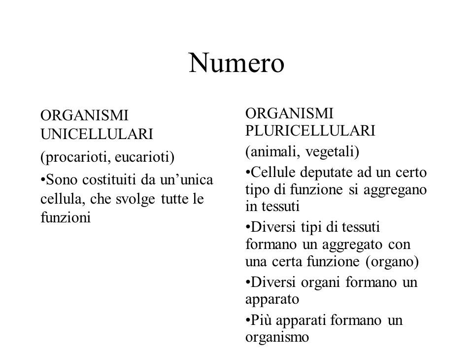 Numero ORGANISMI UNICELLULARI (procarioti, eucarioti) Sono costituiti da ununica cellula, che svolge tutte le funzioni ORGANISMI PLURICELLULARI (anima