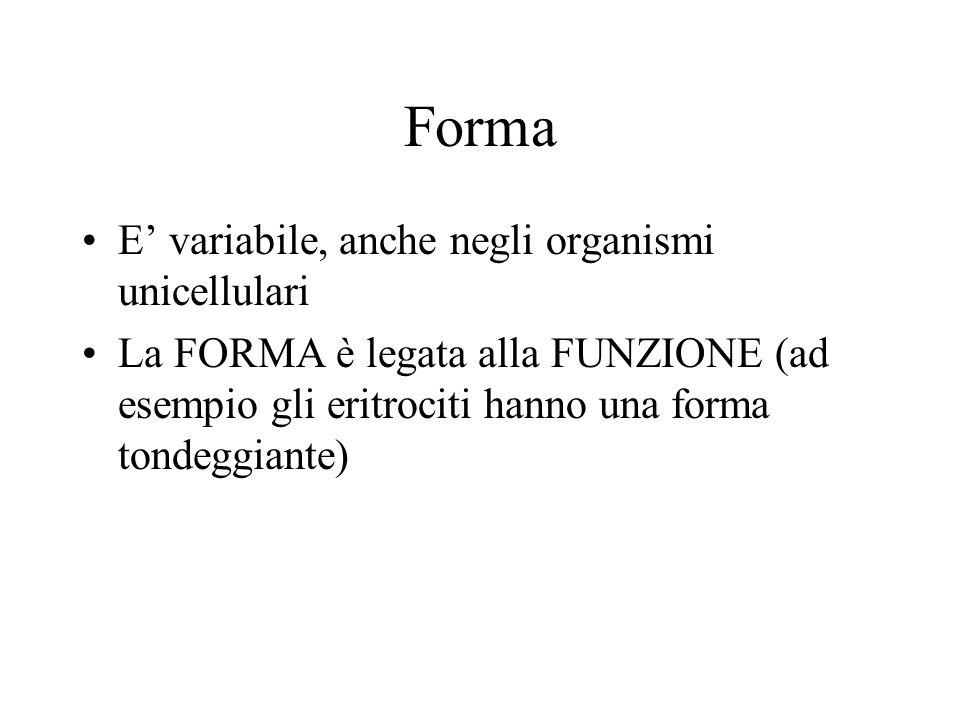 Forma E variabile, anche negli organismi unicellulari La FORMA è legata alla FUNZIONE (ad esempio gli eritrociti hanno una forma tondeggiante)