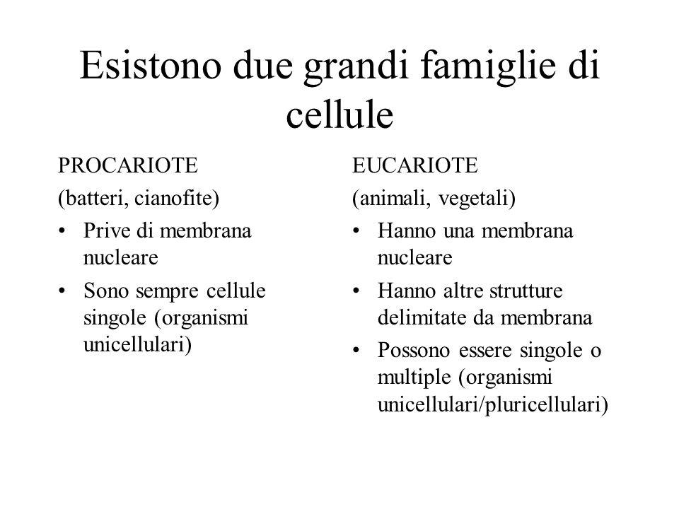 Esistono due grandi famiglie di cellule PROCARIOTE (batteri, cianofite) Prive di membrana nucleare Sono sempre cellule singole (organismi unicellulari