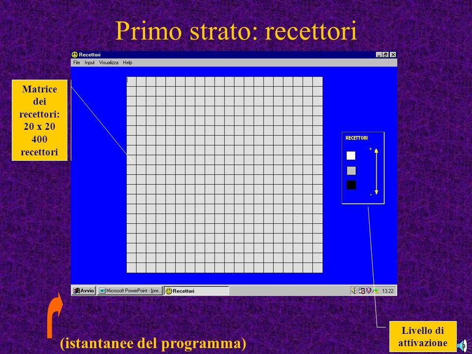 Primo strato: recettori (istantanee del programma) Matrice dei recettori: 20 x 20 400 recettori Livello di attivazione