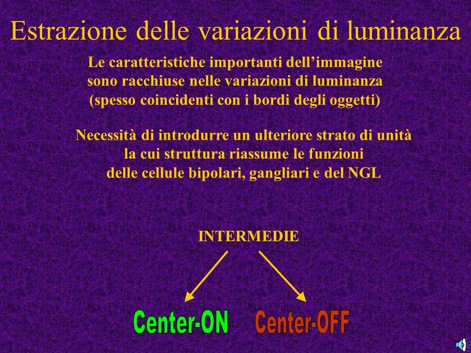 Estrazione delle variazioni di luminanza Le caratteristiche importanti dellimmagine sono racchiuse nelle variazioni di luminanza (spesso coincidenti con i bordi degli oggetti) Necessità di introdurre un ulteriore strato di unità la cui struttura riassume le funzioni delle cellule bipolari, gangliari e del NGL INTERMEDIE