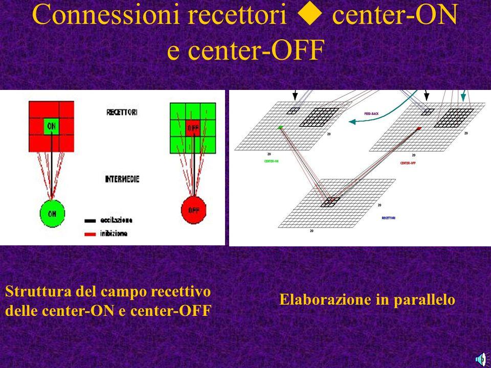 Connessioni recettori center-ON e center-OFF Struttura del campo recettivo delle center-ON e center-OFF Elaborazione in parallelo