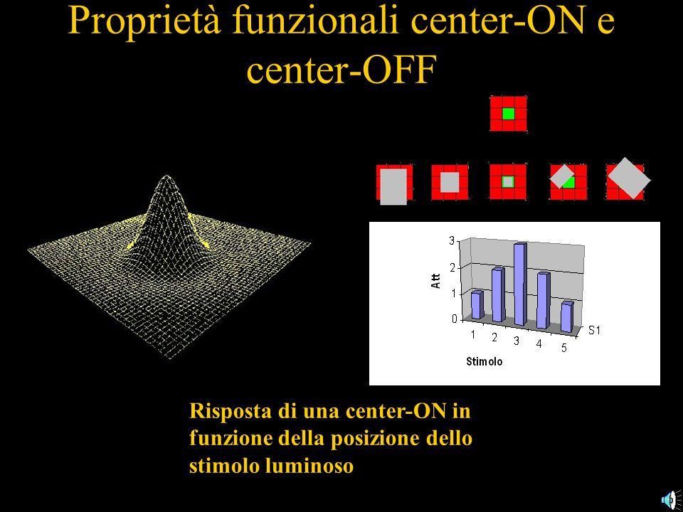 Proprietà funzionali center-ON e center-OFF Risposta di una center-ON in funzione della posizione dello stimolo luminoso