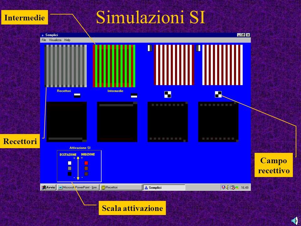 Simulazioni SI Recettori Intermedie Campo recettivo Scala attivazione