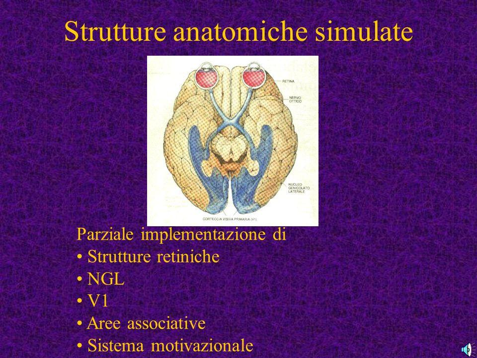 Strutture anatomiche simulate Parziale implementazione di Strutture retiniche NGL V1 Aree associative Sistema motivazionale