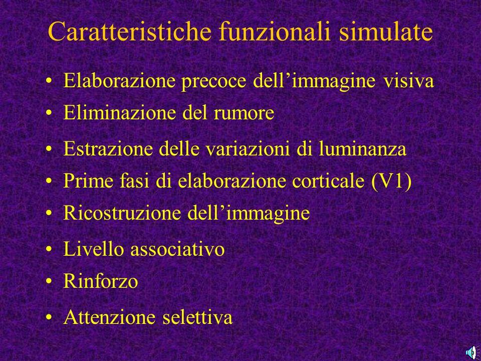 Caratteristiche funzionali simulate Elaborazione precoce dellimmagine visiva Eliminazione del rumore Estrazione delle variazioni di luminanza Prime fasi di elaborazione corticale (V1) Ricostruzione dellimmagine Livello associativo Rinforzo Attenzione selettiva