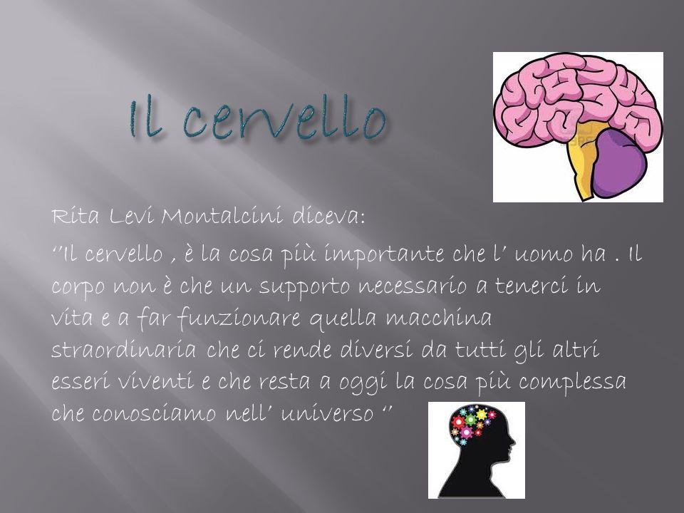 Rita Levi Montalcini diceva: Il cervello, è la cosa più importante che l uomo ha. Il corpo non è che un supporto necessario a tenerci in vita e a far