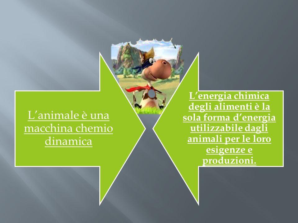 Lanimale è una macchina chemio dinamica Lenergia chimica degli alimenti è la sola forma denergia utilizzabile dagli animali per le loro esigenze e pro