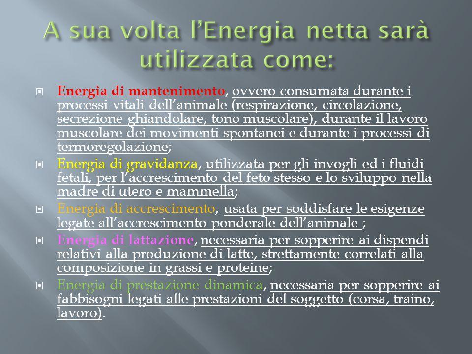 Energia di mantenimento, ovvero consumata durante i processi vitali dellanimale (respirazione, circolazione, secrezione ghiandolare, tono muscolare),